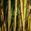BAMBOO'S FOREST